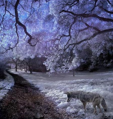 Увидеть невидимое. Мир в лучах инфракрасного света — фото 3
