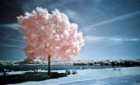 Увидеть невидимое. Мир в лучах инфракрасного света — фото 2