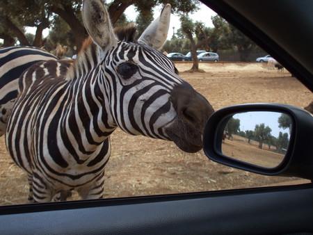 Путешествие по Южной Италии, часть первая: сафари-зоопарк и долина труллей — фото 4