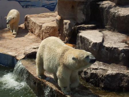 Путешествие по Южной Италии, часть первая: сафари-зоопарк и долина труллей — фото 6