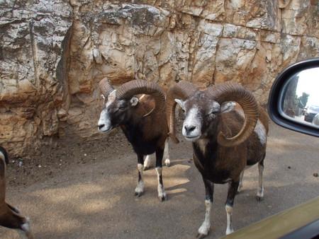 Путешествие по Южной Италии, часть первая: сафари-зоопарк и долина труллей — фото 1