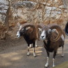 Путешествие по Южной Италии, часть первая: сафари-зоопарк и долина труллей