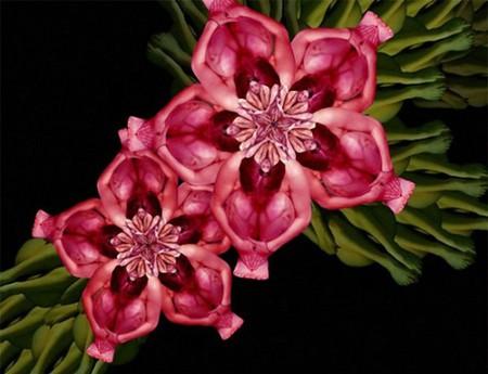 Сесилия Уэббер: Люди – это цветы! — фото 2