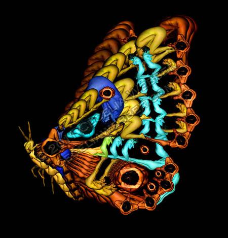 Сесилия Уэббер: Люди – это бабочки! — фото 6