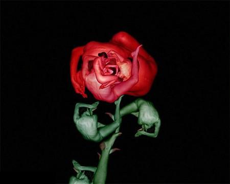 Сесилия Уэббер: Люди – это цветы! — фото 1