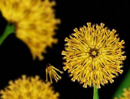 Сесилия Уэббер: Люди – это цветы! — фото 8