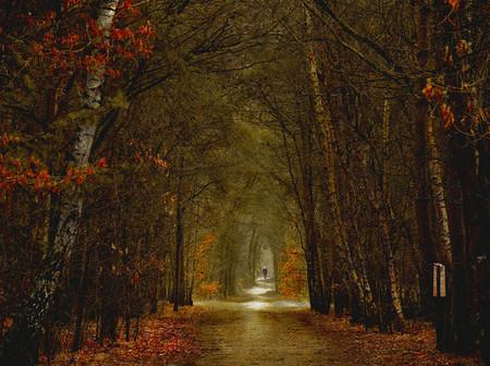 Осень – многоцветная царица… Волшебные фотопейзажи Ларса Ван де Гур — фото 23