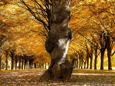 Осень – многоцветная царица… Волшебные фотопейзажи Ларса Ван де Гур — фото 12