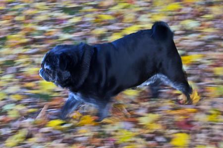 Осень умеет уходить красиво. 55 причин полюбить осень — фото 50