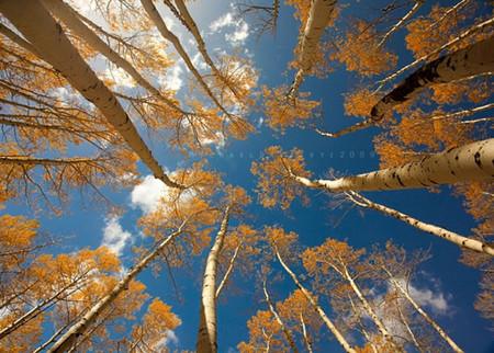 Осень умеет уходить красиво. 55 причин полюбить осень — фото 40
