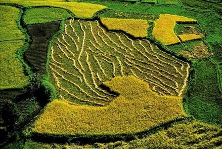 Рисовые поля, берег озера Itasy, Мадагаскар