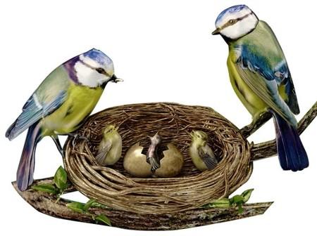 Дорогой эксклюзив – часы Jaquet Droz Bird Repeater — фото 10