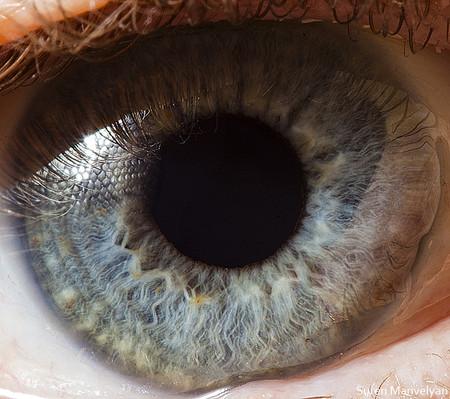 Глаза людей и животных – макроснимки Сурена Манвеляна — фото 18