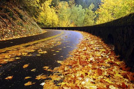 Осень умеет уходить красиво. 55 причин полюбить осень — фото 25