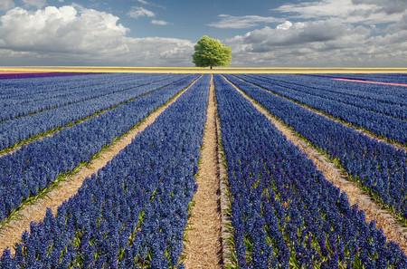 Осень – многоцветная царица… Волшебные фотопейзажи Ларса Ван де Гур — фото 26
