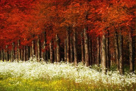 Осень – многоцветная царица… Волшебные фотопейзажи Ларса Ван де Гур — фото 3