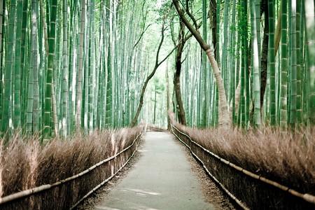 Япония, Киото, бамбуковая роща, красиво … — фото 11