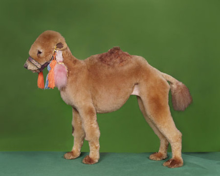 Собачий арт в работах Рена Низерленда — фото 3