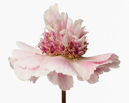 Big Blooms – когда позируют цветы — фото 15