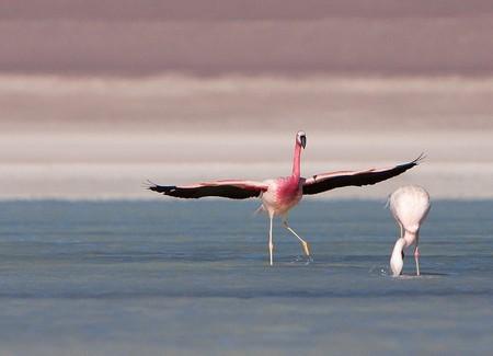 Уюни в Боливии – соляное озеро, соленый отель, фламинго и паровозы — фото 23