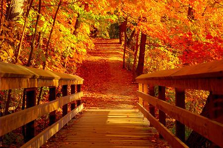 Осень умеет уходить красиво. 55 причин полюбить осень — фото 22