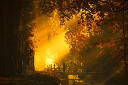 Осень – многоцветная царица… Волшебные фотопейзажи Ларса Ван де Гур — фото 5