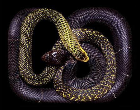Гвидо Мокафико (Guido Mocafico) - Повелитель змей — фото 7