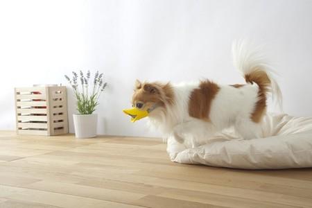 Клювы для собак – японское изобретение Quack Muzzle — фото 3