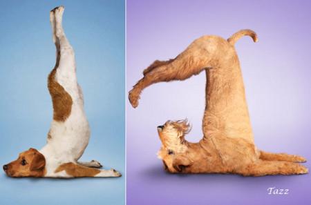 Йога для двуногих от четвероногих — фото 5