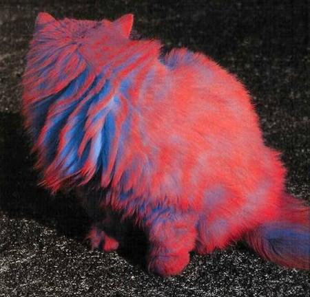 Что такое котопейнт, или «Раскрась кота!» — фото 24
