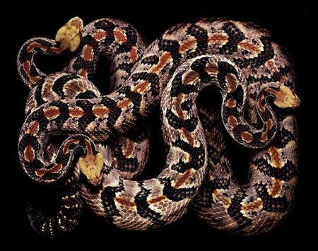 Гвидо Мокафико (Guido Mocafico) - Повелитель змей — фото 6