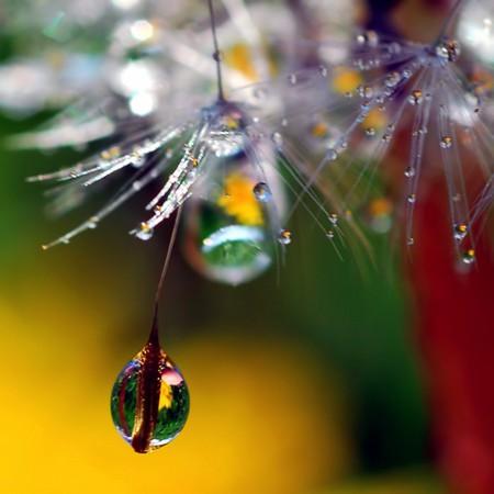 Целый мир внутри капли – фотографии Стива Уолла — фото 20