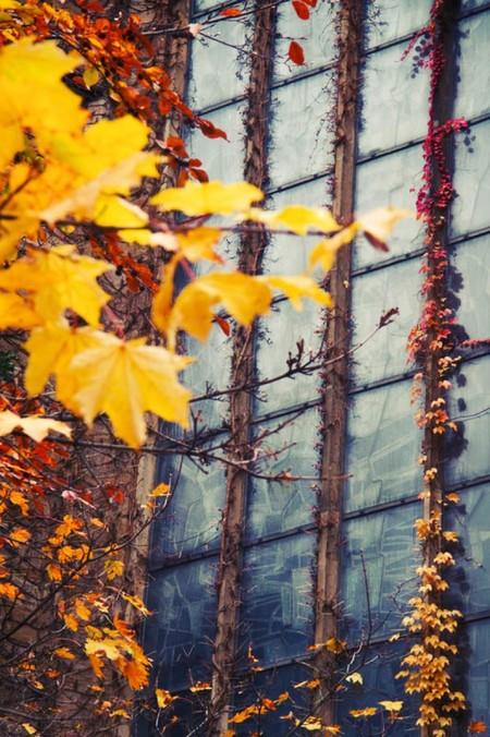 Осень умеет уходить красиво. 55 причин полюбить осень — фото 52