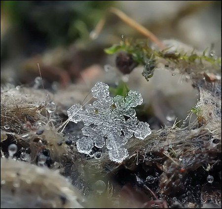 Андрей Осокин – фотограф, которому позируют снежинки — фото 41