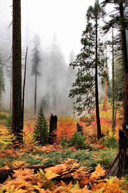 Осень умеет уходить красиво. 55 причин полюбить осень — фото 41