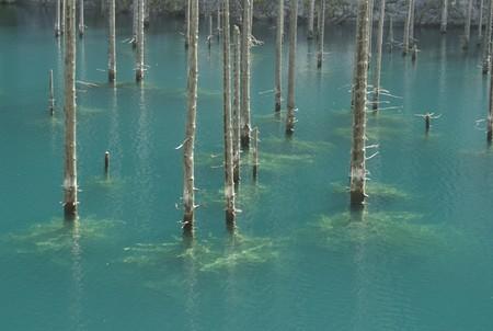 Волшебное озеро Каинды в Казахстане — фото 4