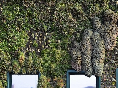 Вертикальный сад – рекордсмен — фото 3