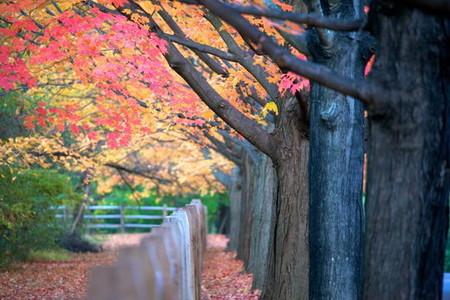 Осень умеет уходить красиво. 55 причин полюбить осень — фото 31