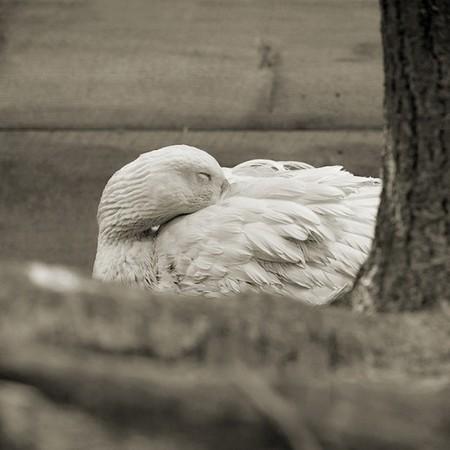 Фотографии пожилых животных от Исы Лешко — фото 3