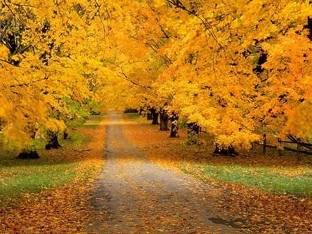 Осень умеет уходить красиво. 55 причин полюбить осень — фото 5