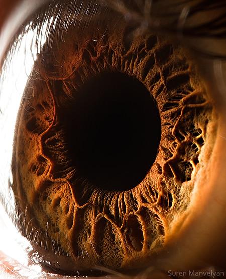 Глаза людей и животных – макроснимки Сурена Манвеляна — фото 24