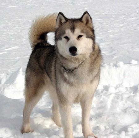 Хаски — одна из моих самых любимых пород собак (собственно, только поэтому фильмом и заитересовалась)