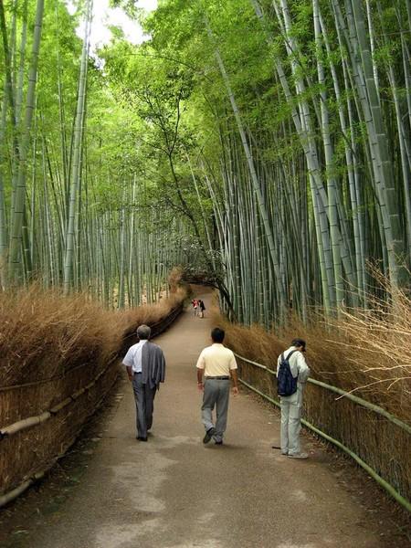 Япония, Киото, бамбуковая роща, красиво … — фото 20