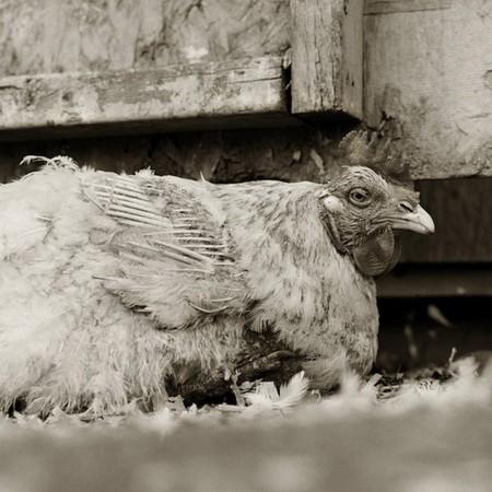 Фотографии пожилых животных от Исы Лешко — фото 6