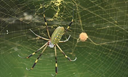 Совместное творчество людей и пауков – платье из паутины — фото 15