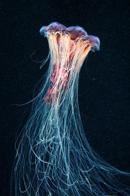 Подводные фотоэксперименты Александра Семенова — фото 10