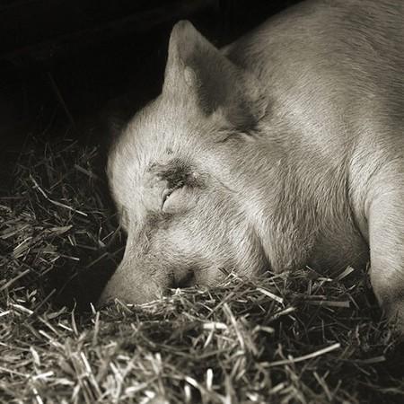 Фотографии пожилых животных от Исы Лешко — фото 8