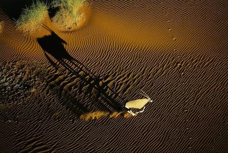 Орикс, бег по пустыне Намиб, Намибия