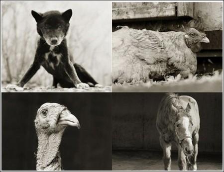 Фотографии пожилых животных от Исы Лешко — фото 1