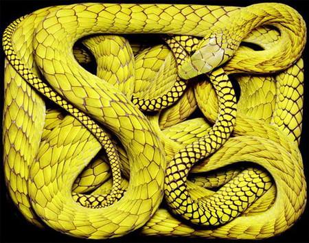 Гвидо Мокафико (Guido Mocafico) - Повелитель змей — фото 12